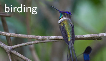 Observacion de Aves, Norte de Peru