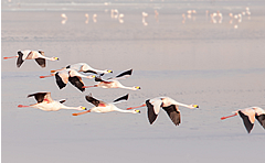 flamingos_bolivia_ecoamericaperu