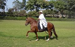 peru_horse_ecoamericaperu