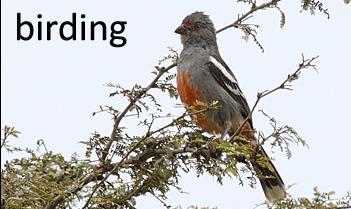 bird_peruvian_plantcutter-351x209_ea111