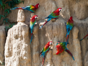 macaws800 (2)